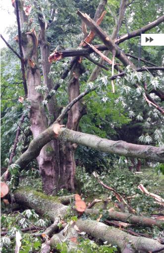 Nachpflanzungen nach Orkan Ela im Grugapark beendet