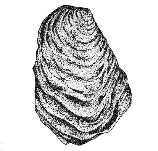 Uralte Meeresablagerungen – mitten in Essen gefunden