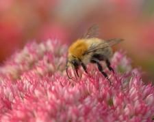 Allgemeinverfügung zur Einrichtung eines Sperrbezirks zum Schutz von Bienen vor der Amerikanischen Faulbrut