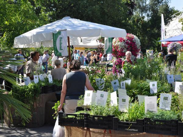 Von der Elfenblume bis zur fleischfressenden Pflanze: Frühjahrs-Pflanzenraritätenmarkt im Grugapark