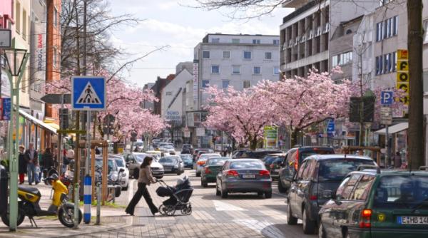 Gutachterliches Ergebnis zur Kirschblüte in Rüttenscheid vorgestellt